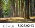 緑 公園 散歩道の写真 30239243
