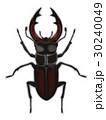 クワガタ 昆虫 虫のイラスト 30240049