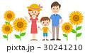 ベクター 家族 ひまわりのイラスト 30241210