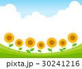 ベクター ひまわり 夏のイラスト 30241216