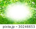 新緑 葉 背景のイラスト 30246653
