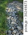 川原 石 雑草の写真 30249873
