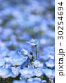 青い妖精 30254694