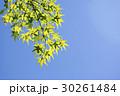 青空と新緑 30261484
