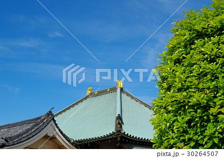 青空と寺の甍と金の鴟尾 青葉の季節 30264507