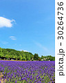 青空 花畑 ラベンダーの写真 30264736