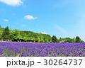 青空 花畑 ラベンダーの写真 30264737
