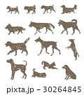 いろいろな犬のスタンプ風シルエット 30264845