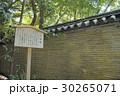 熱田神宮のクスノキ 30265071