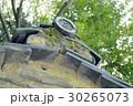 熱田神宮のクスノキ 30265073
