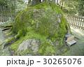 熱田神宮のクスノキ 30265076