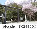 北海道神宮第三鳥居と桜 30266108