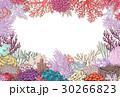 ベクトル 珊瑚 フレームのイラスト 30266823