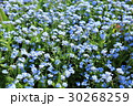 花 花々 花壇の写真 30268259