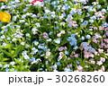 花 花々 花壇の写真 30268260