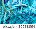 海 海中 水中の写真 30268664