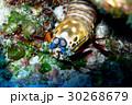 海 海中 水中写真の写真 30268679