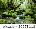 屋久島の森 30273118