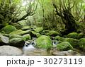 屋久島 森 森林の写真 30273119