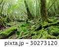 屋久島 森 森林の写真 30273120