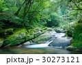 屋久島の森 30273121