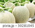 畑のメロン 30281045