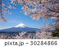 桜 富士山 ソメイヨシノの写真 30284866