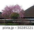 桜と古民家 30285221
