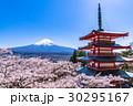 富士山 五重塔 桜の写真 30295167