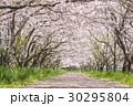 桜 花 桜並木の写真 30295804