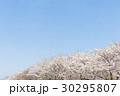 桜並木 桜 花の写真 30295807