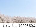 桜並木 桜 花の写真 30295808
