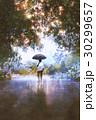 傘 雨傘 カサのイラスト 30299657