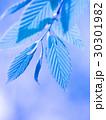 新緑の葉 30301982