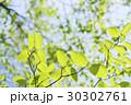 新緑 葉 青空 初夏 30302761