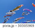 青空に泳ぐたくさんの鯉のぼり k 30305969