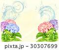 紫陽花 30307699