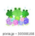 カエルとアジサイ 30308108