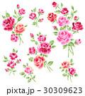 薔薇 花 花柄のイラスト 30309623
