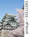 満開の桜と名古屋城 30311065