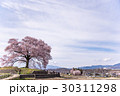 山梨 わに塚の満開の桜 30311298
