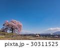 山梨 わに塚の満開の桜 30311525
