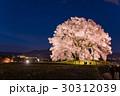 山梨 わに塚の満開の桜 ライトアップの桜 30312039