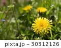 春の野原のイメージと光の中のタンポポ 30312126