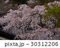 京都大原野 十輪寺の桜 30312206