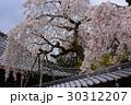 京都大原野 十輪寺の桜 30312207