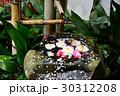 京都大原野 十輪寺の桜 30312208