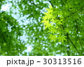 新緑 春 初夏の写真 30313516