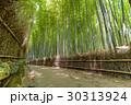 バンブー 竹 青竹の写真 30313924