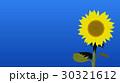 ひまわり 30321612